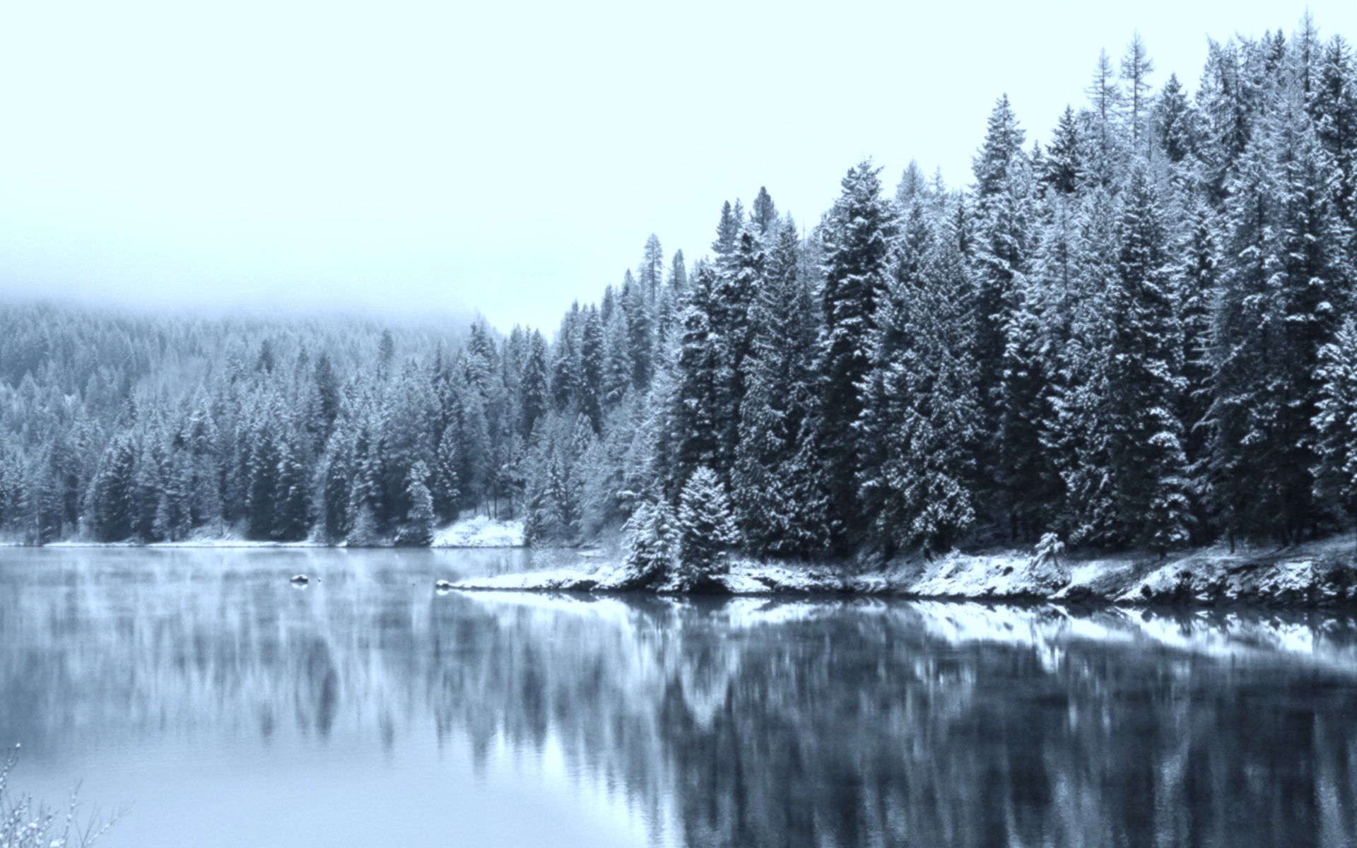 TWO WALKS IN WINTER : : : : : : : WINTER WOODS by SONOMA ...