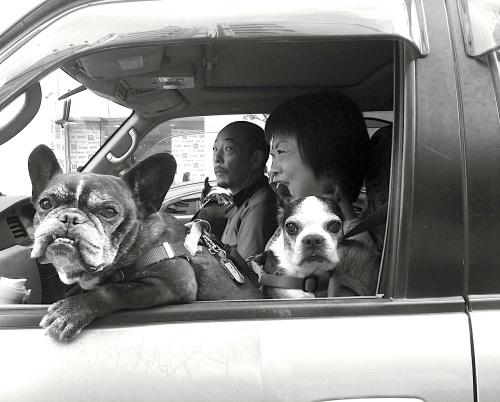 dogs of shinjuku
