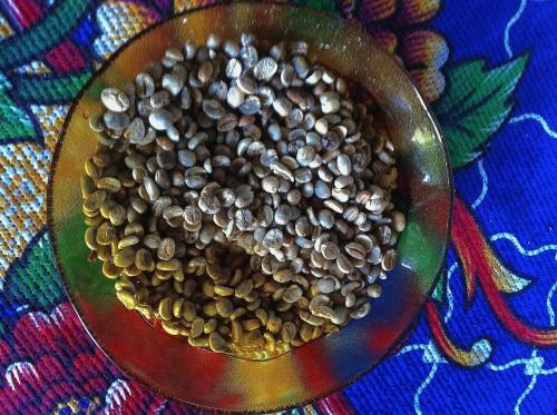civetcoffee_7351