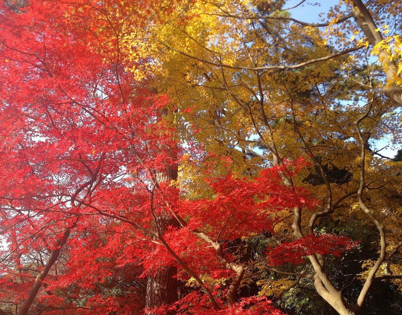 feuillesd'automne_4246
