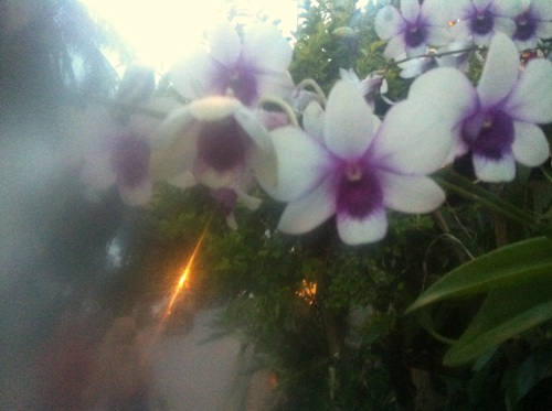 blurryorchids
