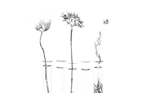 flowers-test-tubes-2620017