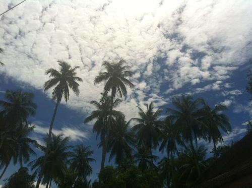 palmtreesprabang