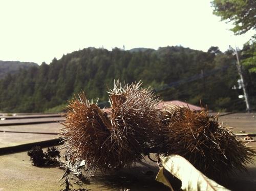 autumninshima