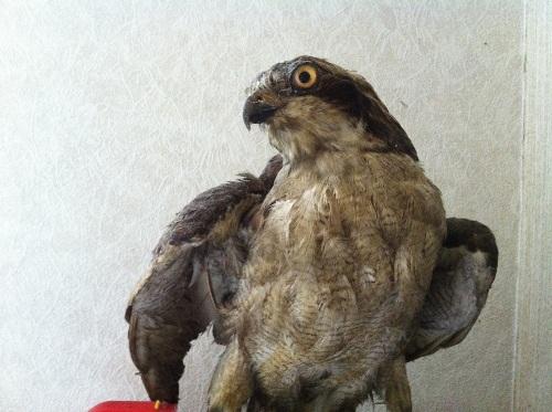 stuffedbird