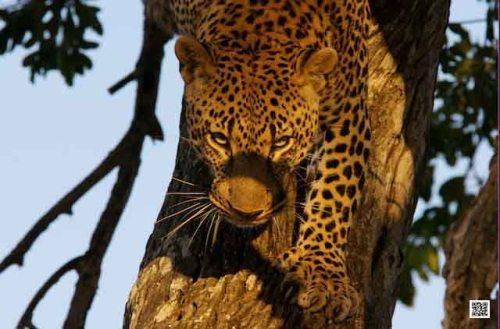 1031_wkwildlifephotographycourseskenyatanzaniasouthafricabotswana8