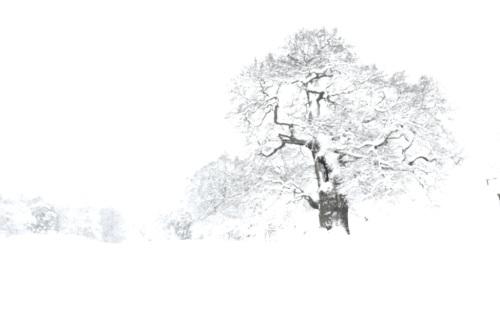 Oak tree with snow in Albury Park