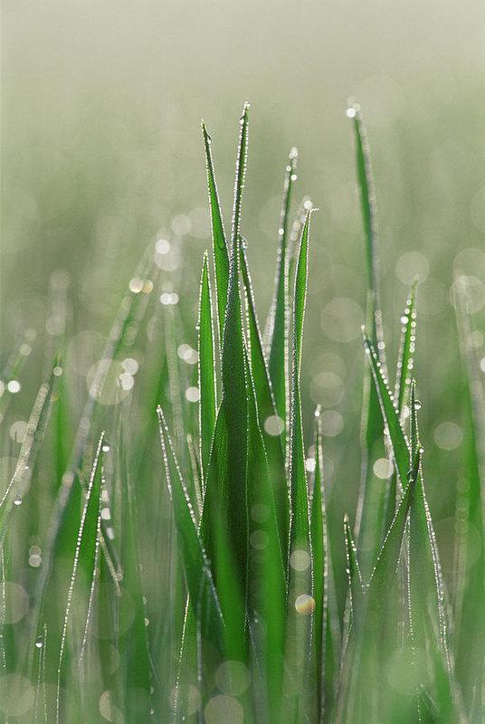 dewdrops-on-blades-of-grass-martin-ruegner.jpg