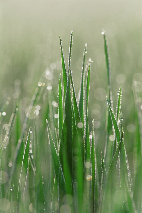 dewdrops-on-blades-of-grass-martin-ruegner.jpg