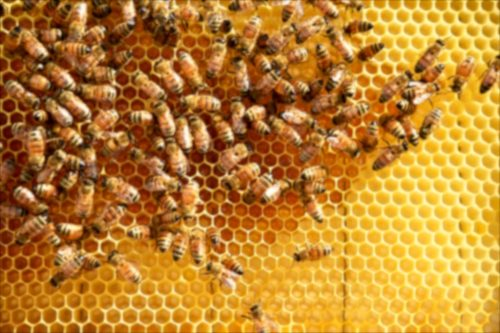 honeycomb-forming-1024x683.jpg