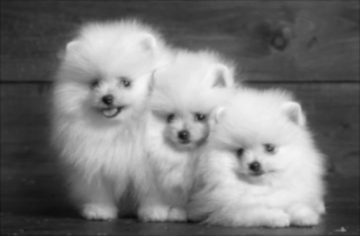 white-fluffy-puppy-trio-wallpaper-preview.jpg