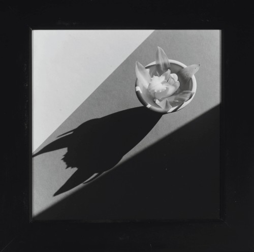2012_NYR_02586_0184_000(robert_mapplethorpe_orchid_with_devil_shadow_1987).jpg