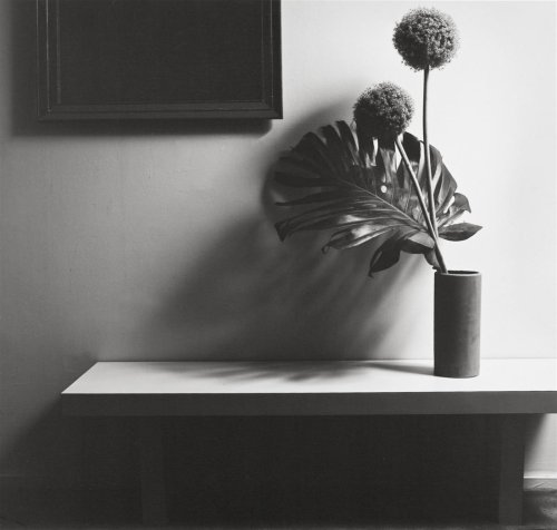 csm_Lempertz-941-163-Photography-Robert-Mapplethorpe-FLOWER_c72e5f8330.jpg