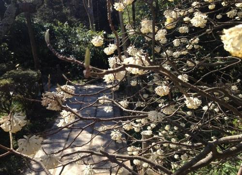flowersinzuisenji_5853