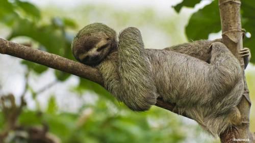 Sloth-header_tcm25-544723.jpg