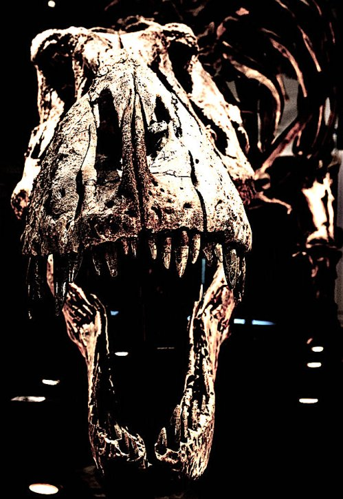 Tyrannosaurus-rex-dinosaur-Trix-skull-Glasgow-Scotland.jpg