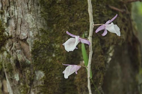 wild-orchids-forest-thailand_42088-1742
