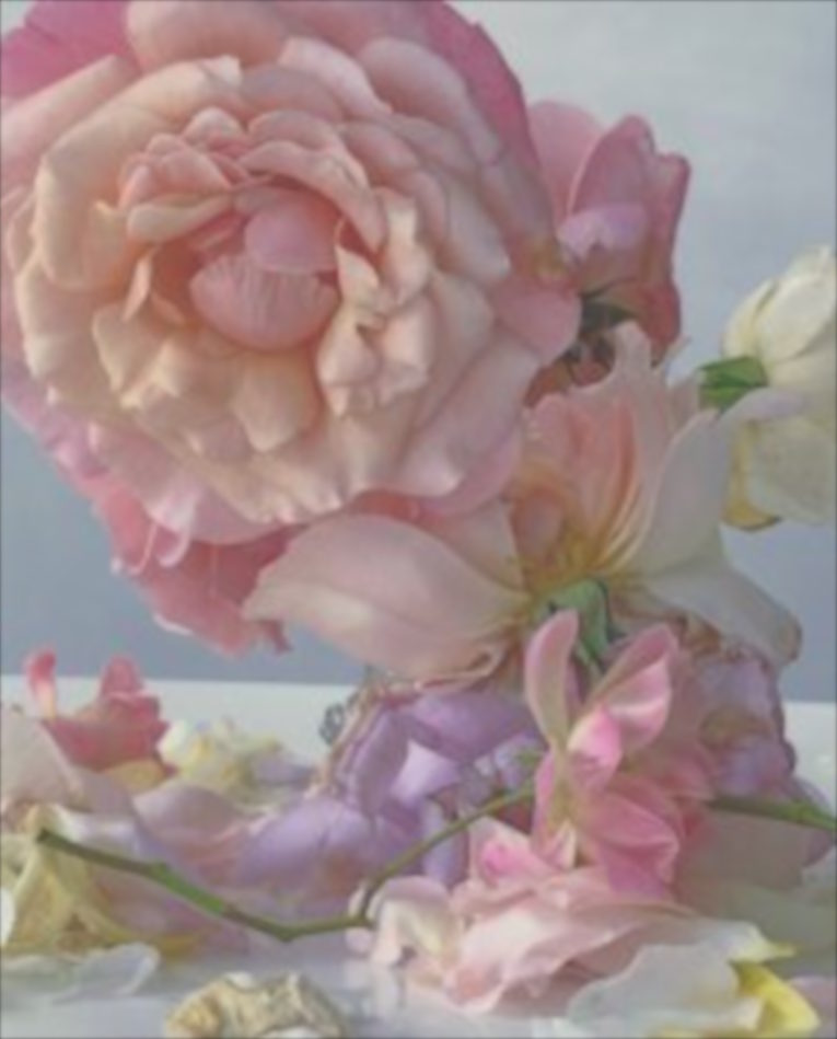 Nick-Knight-Roses-from-My-Garden-Waddesdon-Manor-1-242x300.jpg