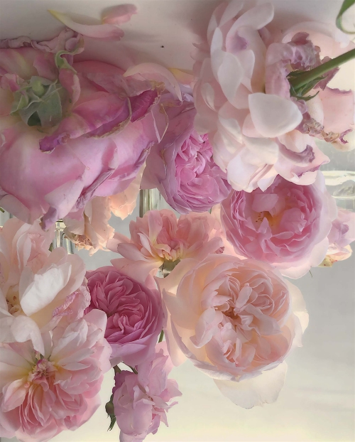portfolio_theweek_nickknight_roses_2.jpg